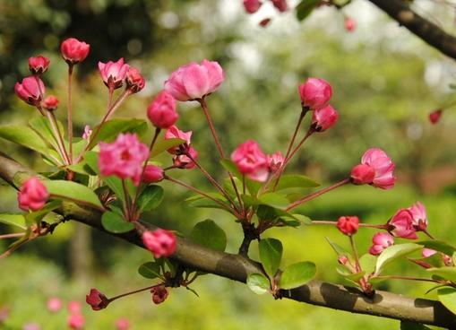 描写春天的词语,描写春天的词语有哪些