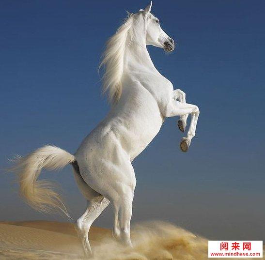 >马的成语大全